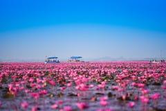 Lagoa vermelha de Udon Thani Lotus Lake Color do marco Fotografia de Stock