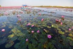 Lagoa vermelha de Udon Thani Lotus Lake Color do marco Fotos de Stock Royalty Free