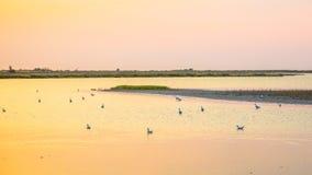 Lagoas coloridas com os p?ssaros em Camarque imagens de stock royalty free