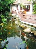 Lagoas de Koi Imagens de Stock Royalty Free
