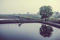 Lagoas de peixes Foto de Stock