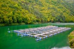 Lagoas de peixes no rio Fotos de Stock