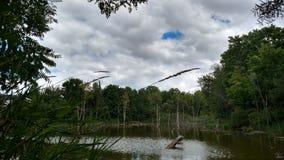 Lagoas puras de Michigan Imagem de Stock Royalty Free