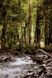 Lagodekhi park narodowy fotografia stock