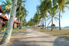 Lagoi Bay, Bintan, Indonesia. Coconut trees at Lagoi Bay at dusk, Bintan, Indonesia Royalty Free Stock Image