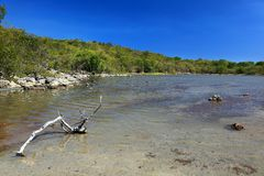 Lagoon. A lagoon at Guanica Puerto Rico Stock Images