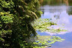 Lagoon. Peaceful beautiful Blue Lagoon Royalty Free Stock Photography