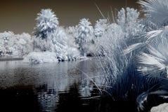 Lagoon Stock Images