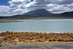 Lagoon on Altiplano in Bolivia,Bolivia Royalty Free Stock Images