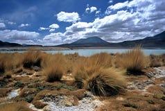 Lagoon on Altiplano in Bolivia,Bolivia. Lagoon and grass on Altiplano at Eduardo Avaroa National Reserve,Bolivia Royalty Free Stock Photography