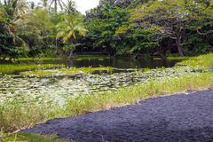 A Lagoon on the Big Island of Hawaii. Near a black sand beach royalty free stock images