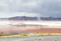 Lagoon in Bolivia. This photo is taken in Bolivia Royalty Free Stock Image