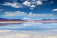 Lagoon in the Bolivian Altiplano. Lagoon with reflections in the Bolivian Altiplano Royalty Free Stock Image