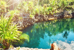 Lagoon Caribbean Sea underwater lakes Cuba sea water Royalty Free Stock Photos