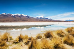 Lagoon Celeste on the plateau Altiplano, Bolivia Royalty Free Stock Photography