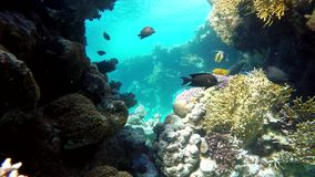 Lagoon, The corals and fish. Coral reef. Exotic fishes. The beauty of the underwater world. Life in the ocean. Diving on a tropical reef. Submarine life. Clear stock video