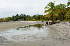 Lagoon drained. Palm trees and huts in a lagoon drained Royalty Free Stock Photos