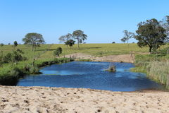 Lagoon. On the farm stock image