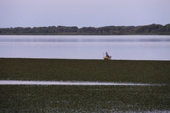 Lagoon with fisherman. On boat Stock Photos