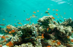 Lagoon with fishes and corals. Lagoon with swimming fishes and corals Stock Photo