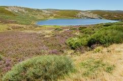 Lagoon. Glacial lake in the region of Sanabria, Zamora Province, Spain Stock Photos