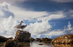 Lagoon Gulls. A relaxing, peaceful, coastal lagoon environment inspiration for relaxed nature vacations stock image