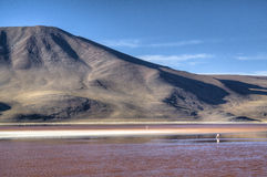 Lagoon at the highlands. Lagoon in the Andean highlands in Bolivia Stock Photography