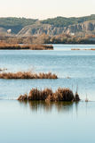 Lagoon. Image of a tranquil lagoon with reeds Royalty Free Stock Images