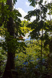 Lagoon inside the jungle Stock Photos