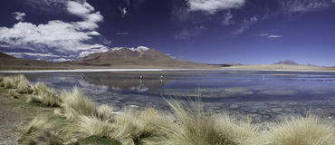 Lagoon or lake in Andes Bolivia panorama Royalty Free Stock Images