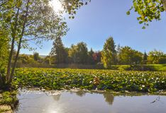 Lagoon landscape on a sunny day. Amazing Nature landscape view of a lagoon on a Sunny Autumn day Stock Images