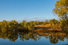 Lagoon in late afternoon. The water reflects the gum trees in late afternoon light Royalty Free Stock Photos