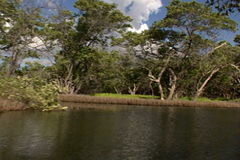 Lagoon with mangroves stock video