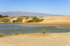Lagoon at Maspalomas Royalty Free Stock Photography