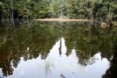 Lagoon, New Zealand Royalty Free Stock Photo