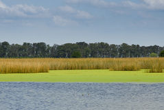 Lagoon in the Pampas Royalty Free Stock Image