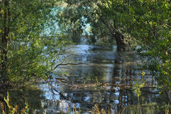 Lagoon. And the recess of the Durance river with submerged trees Royalty Free Stock Photography