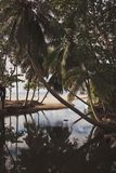 Lagoon of a tropical island. Reflection of palm trees in the water. Vertical frame. Lagoon of a tropical island with white sand. Reflection of palm trees in the Royalty Free Stock Image