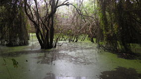 Lagoons Stock Image