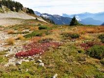 Lagopède alpin Ridge avec des couleurs de chute Photos libres de droits