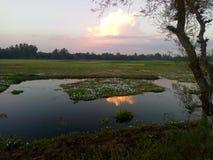 lagos imagens de stock royalty free