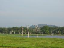 Lagos, pássaros, natureza e paisagem no parque nacional de Yala, Sri Lanka fotos de stock royalty free