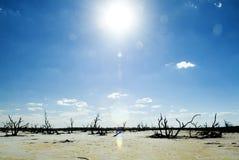 Lagos salt e árvores inoperantes Fotografia de Stock