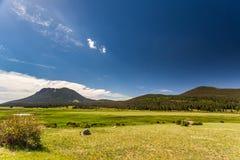 Lagos sheep en el parque de herradura del oeste en el rastro Ridge Road Imágenes de archivo libres de regalías