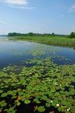 Lagos y bosques de la región de Uusimaa en Finlandia Imagen de archivo libre de regalías