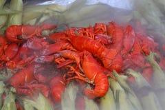 A lagosta coze Imagens de Stock Royalty Free