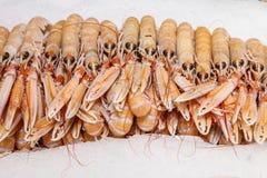 Lagosta fresca do caranguejo do calamar no gelo imagem de stock royalty free