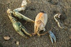 A lagosta permanece Foto de Stock