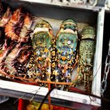 lagostas Imagens de Stock Royalty Free