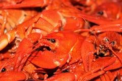 Lagostas grandes no fundo do close-up fervido das lagostas foto de stock